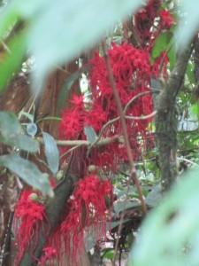 Gentle fierce beauty in the Amazon forest!